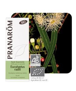 Eucalyptus radié (Eucalyptus radiata) - Huile essentielle