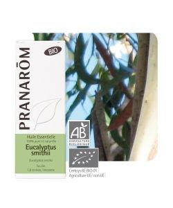 Eucalyptus smithii (Eucalyptus smithii)