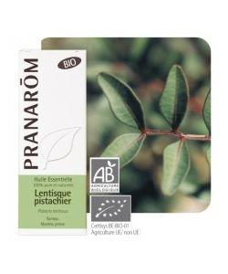 Lentisque pistachier (Pist. lent. ct 1)