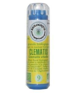 Clématite - Clématis (n°9) SANS ALCOOL BIO, 130granules