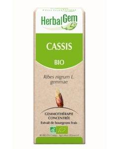 Blackcurrant (Ribes nigrum) buds BIO, 50ml