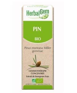 Pin  (Pinus Montana) bourgeon BIO, 50ml