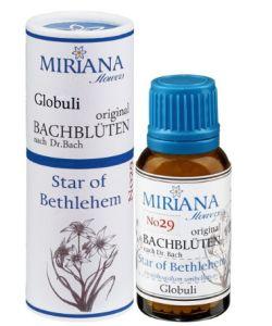 Star Of Bethlehem 29 Bach Flower Alcohol Free